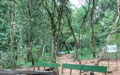 The Rebirth of Wangari Maathai Foundation